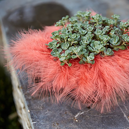 Soft marabou feathers in a soft coral color. That's all it takes!