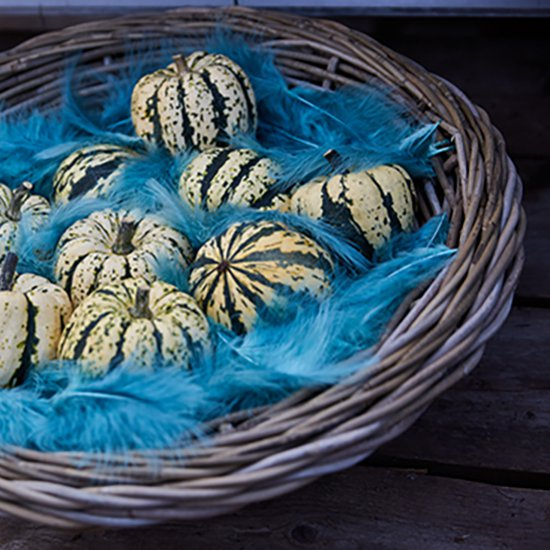 Pumpkins & blue feathers: eyecatcher!
