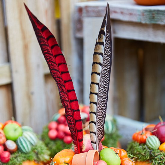 Pumpkins and pheasant feathers: fall deco, Halloween,...